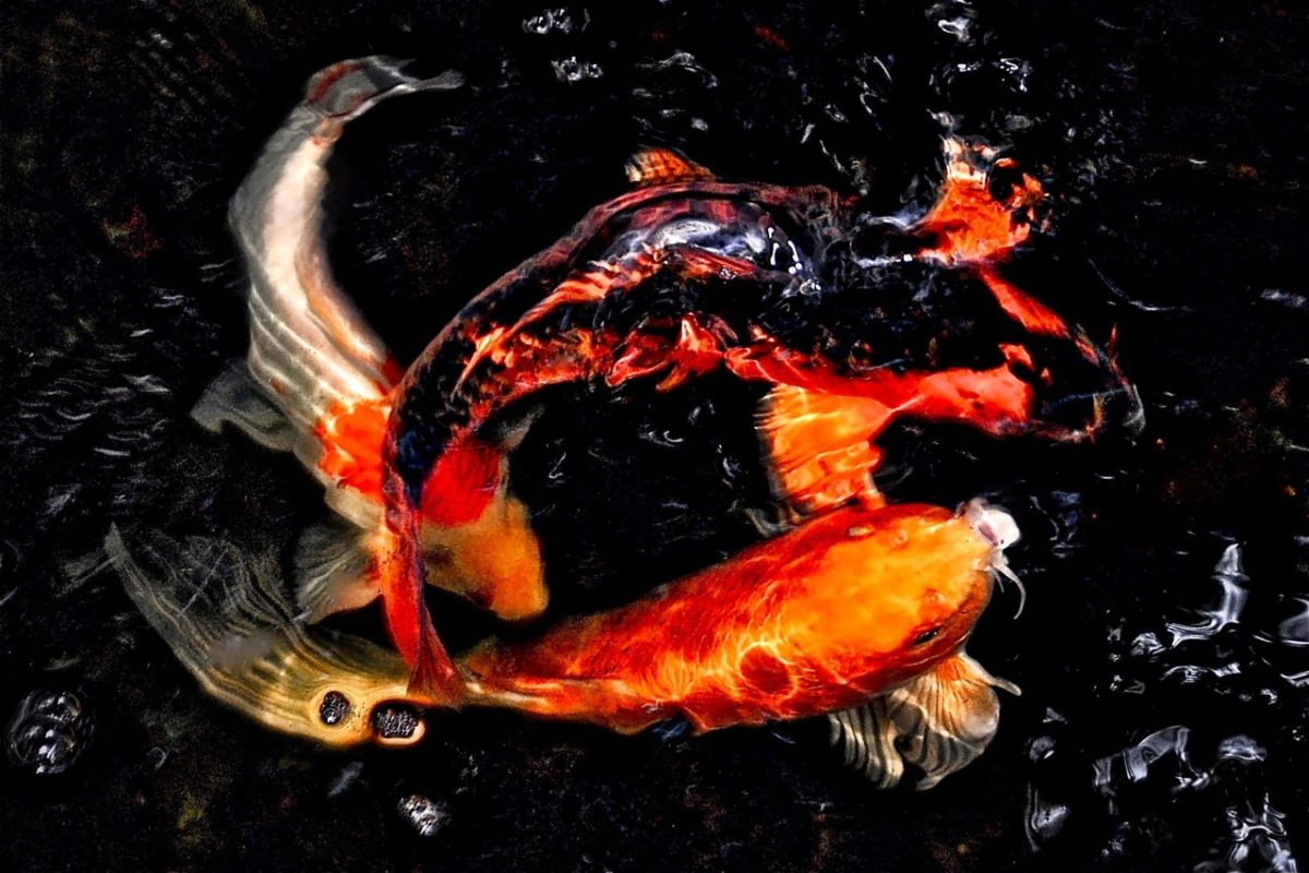 Our Koi pond, photo by Russ
